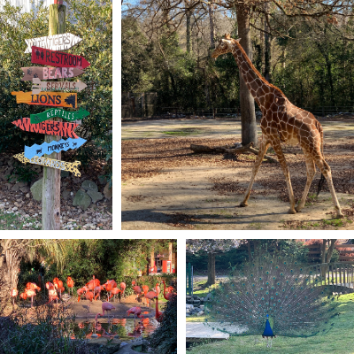 Five Places to See Animals in the Carolinas